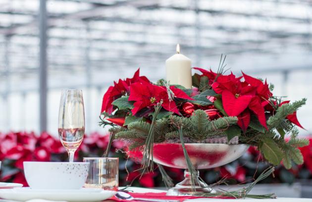 Vánoční hvězda je rostlina spojená s adventem a její obliba rok od roku stoupá.