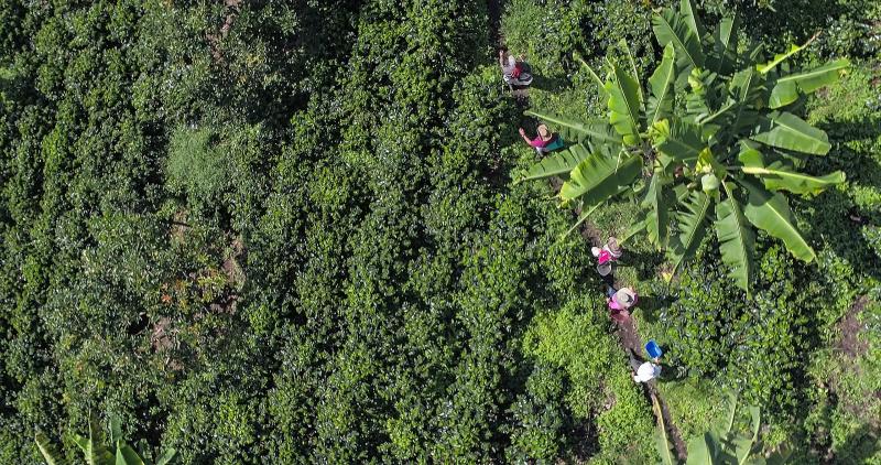 Seznamte se s farmáři, kteří pěstují kávu Nespresso