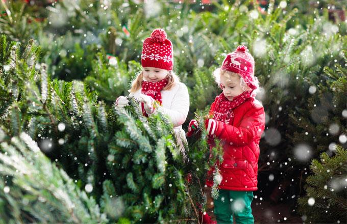 7 tipů, aby stromek přežil do Vánoc