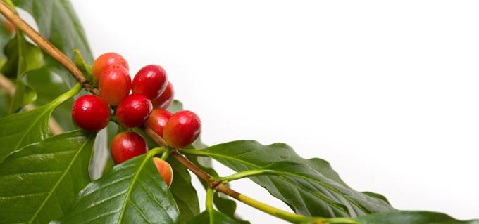 COFFEE CLUB: Velikonoční nadílka