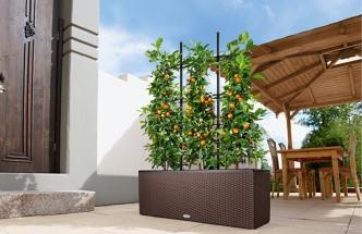 Ovocným dřevinám se daří i na balkoně (foto: Hornbach)