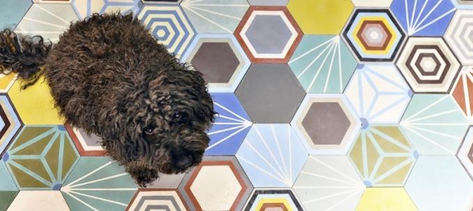Cementová, ručně vyráběná dlažba z Maroka, dekor Hexa Patchwork, různé formáty a tvary, rozměr 20 x 23 cm, cena 2 590 Kč/m2, 125 Kč/ks, www.vinciprojekt.cz