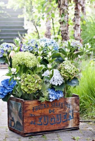 První pomoc – pokud má květina svěšené listy, sílu jí zpět vrátíte dostatečnou zálivkou a umístěním na chladnější místo