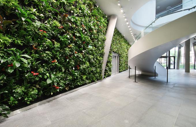 Živé rostliny v interiéru čistí vzduch, snižují pocit únavy, zlepšují náladu, zvyšují náš pracovní výkon a kreativitu a eliminují hluk.