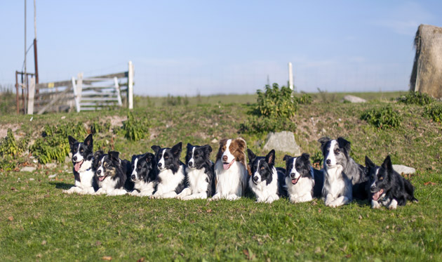 Značka Fitmin respektuje požadavky zvířat, spolupracuje s významnými chovateli, konzultuje s nimi trendy a hledá nová řešení, aby byly její produkty vyvážené a plně vyhovovaly potřebám zvířat.