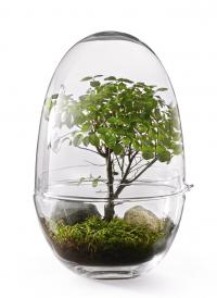 Mini skleník Grow XL (Design House Stockholm), design Caroline Wetterling, O 20 cm, 32 cm, cena 2 010 Kč, WWW. DESIGNBUY. CZ