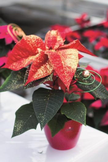 Nejkrásnější svátky roku se letos ponesou vtradičním duchu. Koblibě se vrací klasické vánoční barvy a jemné barevné odstíny.