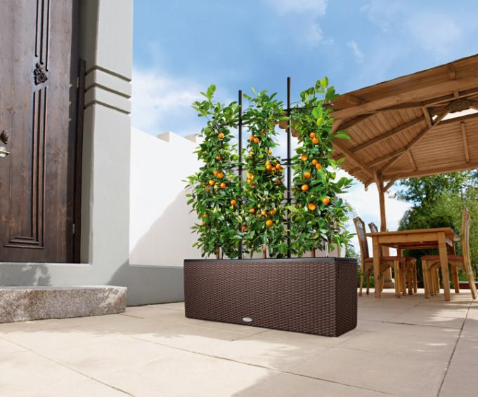 Barevný balkon plný květin, vůní a vlastnoručně vypěstovaných bylinek je snem každého milovníka rostlin. Navíc díkyminiaturním odrůdám stromů a keřů můžete na balkoně pěstovat i ovoce. Spraktickými tipy odborníků zHornbachu je snadné zkrášlit si balkon či terasu anebo si vypěstovat vlastní úrodu. Tak se letos do toho pusťte taky.