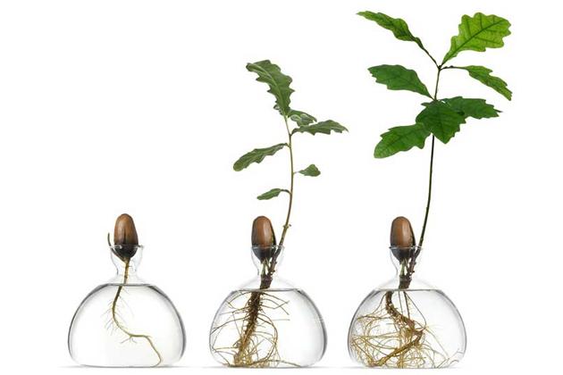 Vypěstujte si ve váze avokádo nebo dub