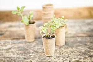 Vypěstovat domácí zeleninu chce trpělivost. S výsadbou semínek by se mělo začít už na konci února nebo v březnu, doba sklizně je většinou červenec, srpen a září. Pokud si nejste jisti správným načasováním, zeptejte se odborného personálu v oddělení zahrady nebo se řiďte návodem na balení.